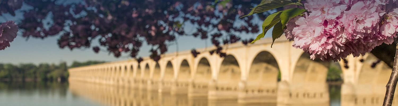 Árbol florecido junto a un puente
